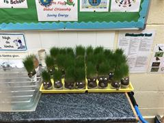 Room 16 - Grass Heads Update